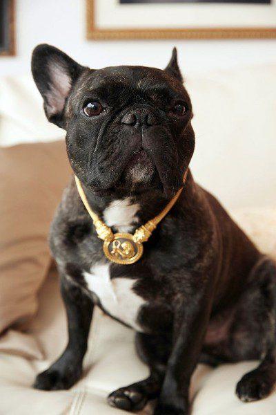 BIM's dog Napoleon