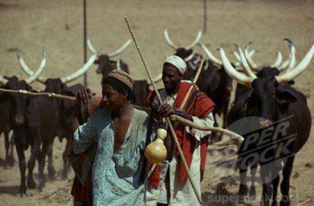 Nigeria Fulanis