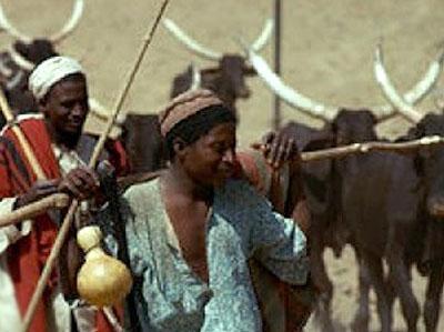 Blame Criminals Not Fulani Herdsmen For Killings----JNI