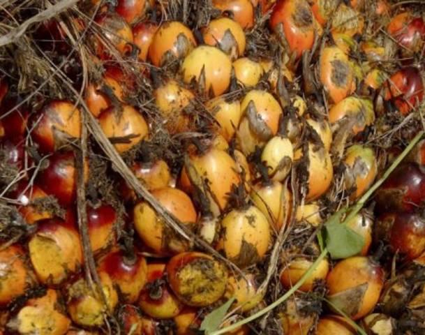 wpid-64273343-oil-palm.jpg
