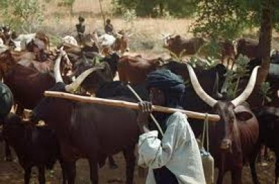 fulani-herdsmen (1)