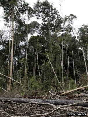 Experts say the world's forest provide a valuable and irreplaceable source of genetic resources ?