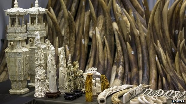 China has started to destroy seized ivory in public