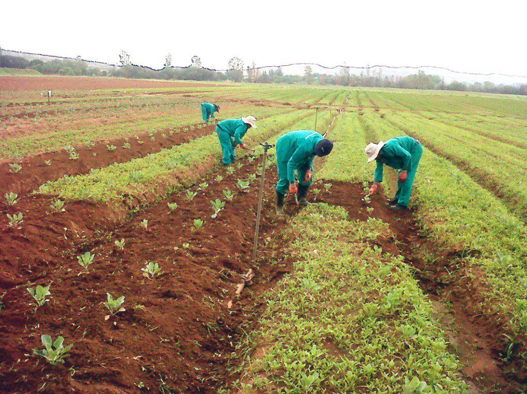 bekker-farmers-first-harvest11-1024x767