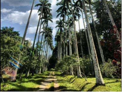 Bunso Arboretum Ecotourism Centre