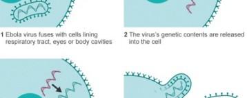 US Response to Ebola virus