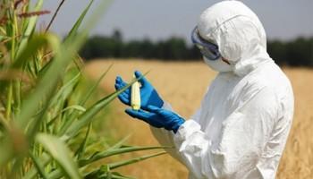 Help demystify use of GMOs – Scientist