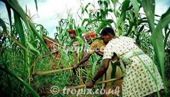 Sissala East DCE Poised To Help Masara Farmers
