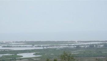 Wetlands of Sakumo Face Serious Threat