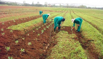 Govt Asked To Earmark Certain Areas For Food Cultivation