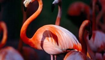 IFEJ-Flamingo Award closes onSept 12