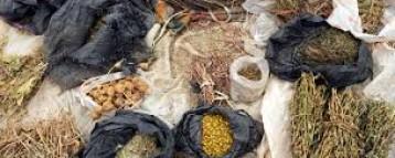 Registrar Condemns Quack Traditional Medicine Practitioners