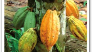 Ghana's forecasts for 2014 still robust