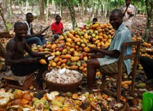 Atwima-Mponua Cocoa farmers receive inputs
