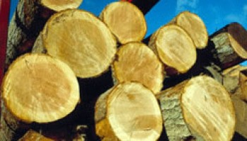 FC stops six timber contractors from logging activities